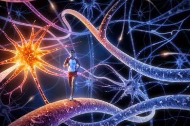 Nanopartículas para facilitar trasplantes y evitar rechazos, un avance importante