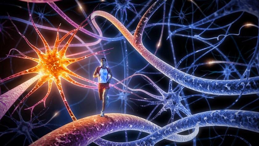 Nanopartículas para facilitar trasplantes y evitar rechazos, un avance importante 35