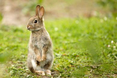 Bad Rabbit, el nuevo ransomware que podría seguir los pasos de WannaCry y NotPetya