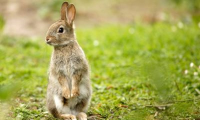 Bad Rabbit, el nuevo ransomware que podría seguir los pasos de WannaCry y NotPetya 62