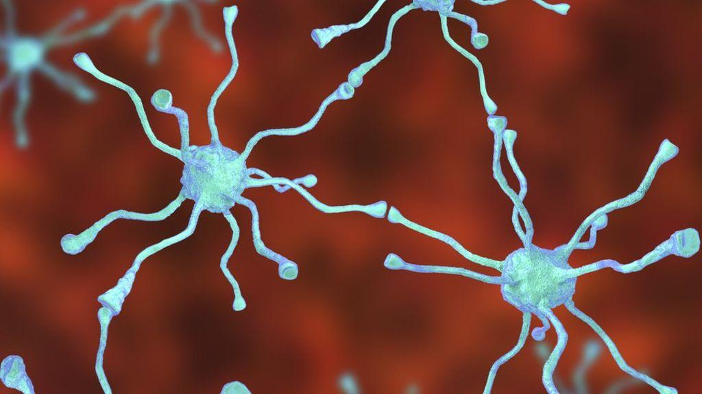 Células madre apiladas en 3D, un importante avance 29