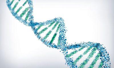 El primer sistema de almacenamiento basado en ADN estará disponible próximamente 83