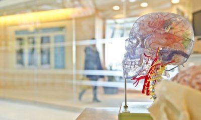 El ejercicio suave reduce el envejecimiento cerebral, según un estudio 39