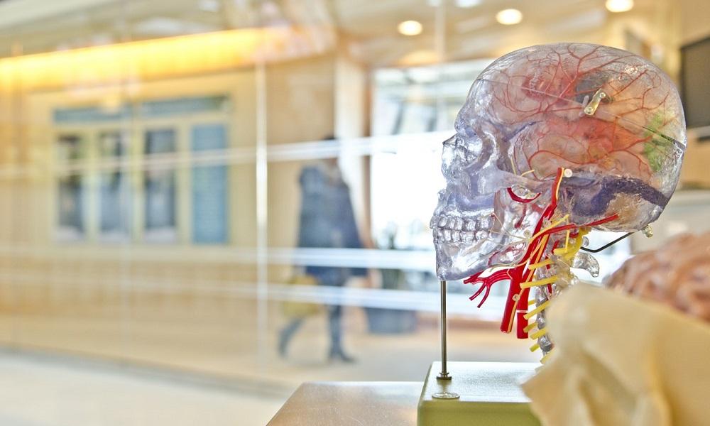 El ejercicio suave reduce el envejecimiento cerebral, según un estudio 30