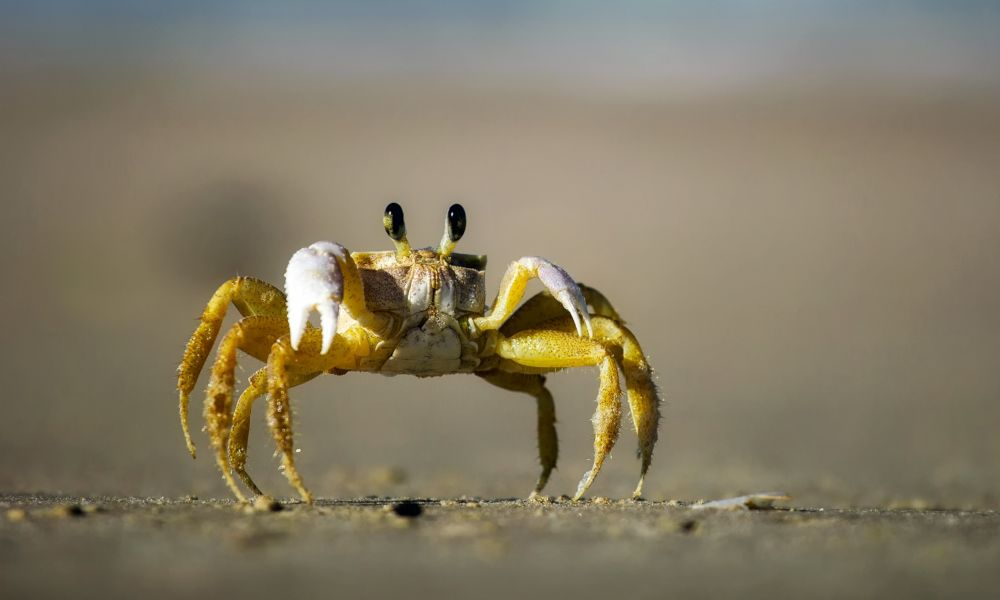 GrandCrab