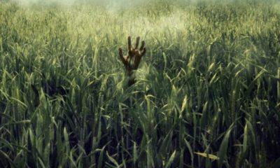 """Netflix inaugurará Sitges con """"En la hierba alta"""", basada en un relato de Stephen King 74"""