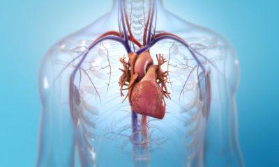 BIOLIFE4D ha imprimido con éxito un mini corazón humano 32