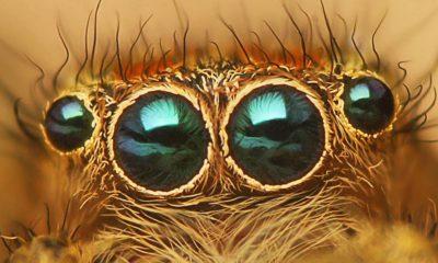 visión de las arañas