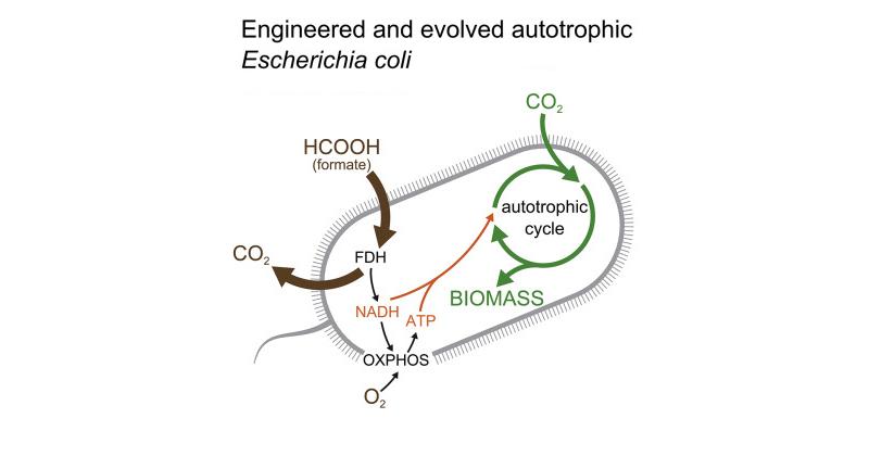Ecoli Cepa Dioxido de carbono