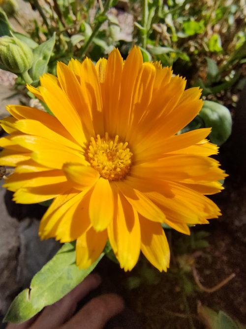 realme X2 Pro flor Color HDR