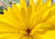 realme X2 Pro flor Macro