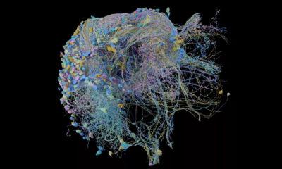 Google publica las imágenes del mayor mapa cerebral captado hasta la fecha 3