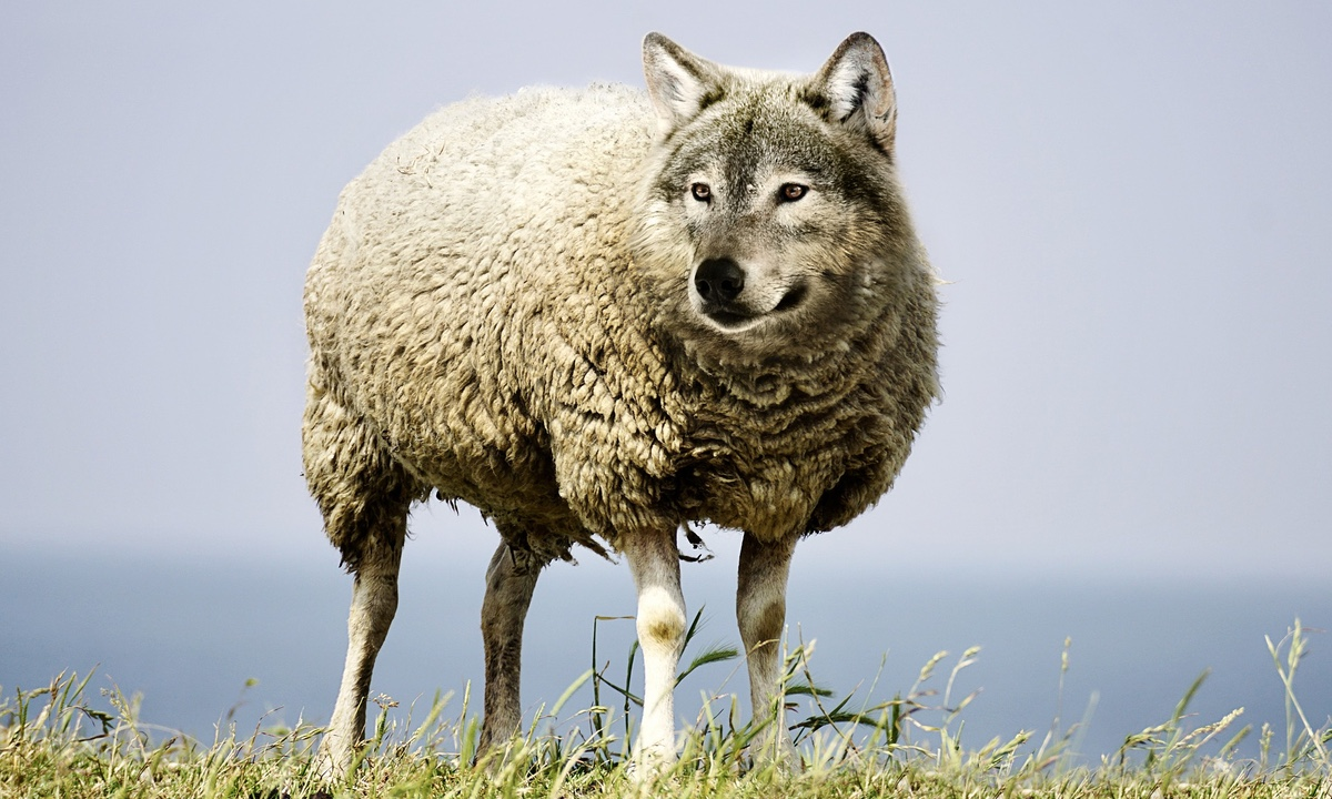 Phishing: lobos con piel de cordero