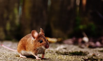 Neurociencia: primer mapa 3D del cerebro de un ratón