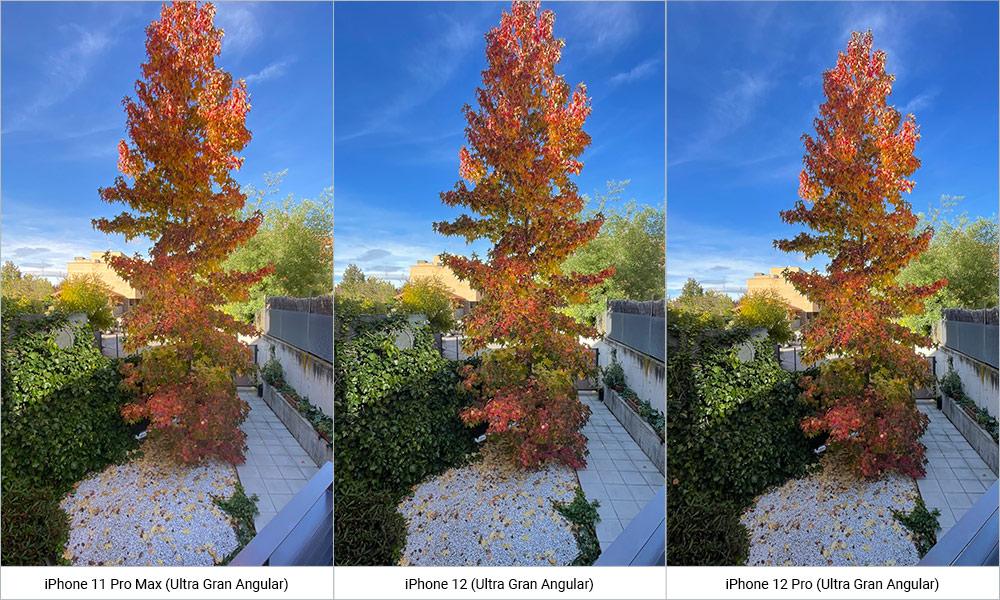 Comparativa fotos iPhone 12, iPhone 12 Pro y iPhone 11 Pro Max