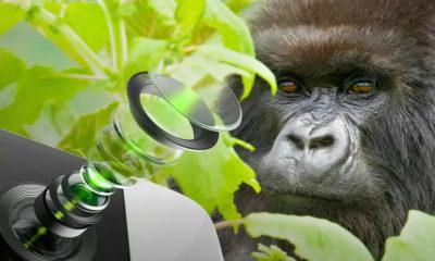 Gorilla Glass DX